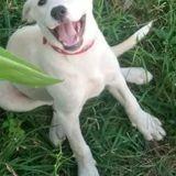 Khea, Chiot à adopter