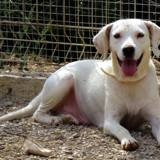 Betty, Chien à adopter