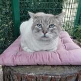 Jonas, Chat à adopter