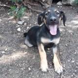 Tiko, Chiot à adopter