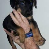 Mei-ko, Chiot à adopter