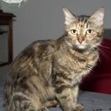 Délia, Chat à adopter