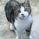 Marley, Chaton à adopter