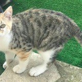 Vanille, Chaton à adopter