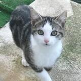 Maguy (réservée), Chaton à adopter