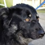 Royy, Chien à adopter