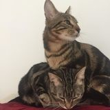Jozy et guizmo, Chaton à adopter