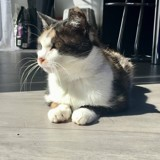 Anaat, Chat à adopter