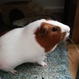 Sprite, Animal à adopter