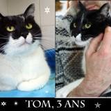 Tom tout doux, Chat à adopter