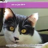 Jasmine, Chaton à adopter