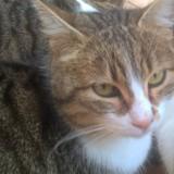 Sheba, Chat à adopter