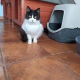 Presley, Chat à adopter