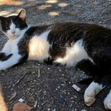 Solo, Chat à adopter