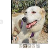 Luki, Chien à adopter