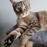 Kirikou, Chaton à adopter