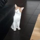 Nils, Chat à adopter