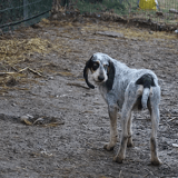 Max, Chien à adopter