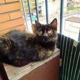 Nala, Chat à adopter