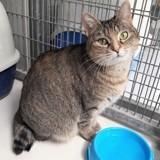 Neko, Chat à adopter