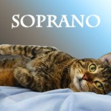 Soprano le charmeur, Chat à adopter