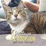 Pattaya, Chat à adopter
