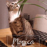 Monica, Chat à adopter