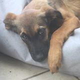 Pia (réservée !), Chiot à adopter