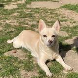 Maya 3 ans dans le 95 adoption en ile de france seulement, Chien à adopter