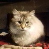 Patoune, Chat à adopter