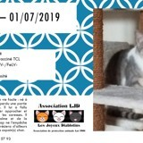 Adoption Chaton Oise