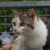 Fannie, Chat gouttière à adopter