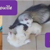 Noisette et grisouille, Animal à adopter