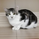 Ornelle, Chaton à adopter