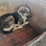 Mika, Chien à adopter