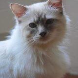 Pilou, Chat à adopter