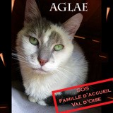 (sos) aglae, Chat à adopter