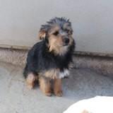 Luffy, Chiot à adopter