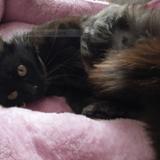 Palma, Chat à adopter
