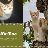 Metoo, Chaton à adopter