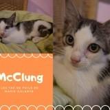 Mc lung, Chaton à adopter