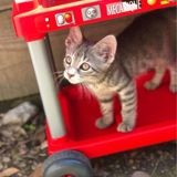 Fyfy, Chaton à adopter