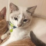 Casper, Chaton à adopter