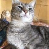 Pénélope, Chat à adopter