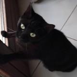 Milow, Chat européen à adopter