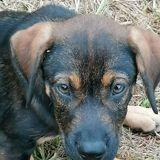 April, Chiot à adopter