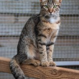 Lucky, Chat à adopter