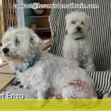 Enzo et isla, Chien à adopter