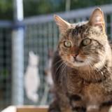 Amaya, Chat gouttière à adopter