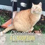 Clémentine, Chat européen à adopter